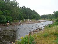 Horse Riding down the River Druie
